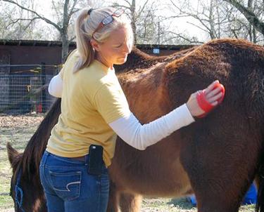 Panhandle Equine Rescue 1